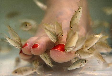 FeetNibblingFish2009-06-20.jpg