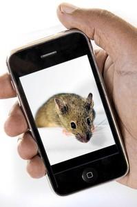 MouseCellphone2010-01-24.jpg