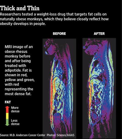 AdipotideObesityGraphic2012-02-05.jpg