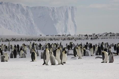 PenguinsGaloreInAntarctica2012-05-17.jpg