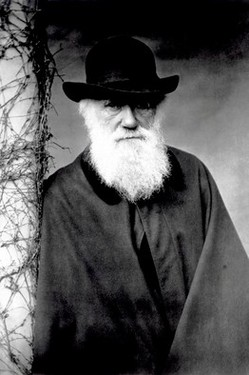 DarwinCharlesIn1881.jpg