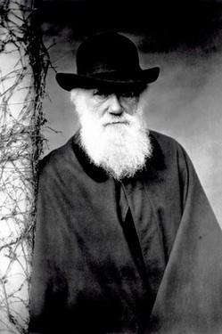 DarwinCharlesIn1881.jpg