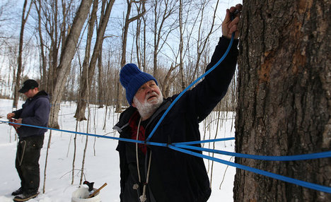 New Technology Allows Maple Syrup Farms to Adapt and Thrive with Global  Warming 57a8cd394e75