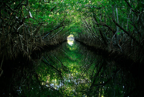 MangroveForest2014-01-19.jpg