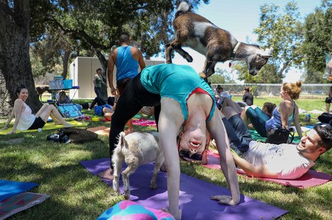 GoatYogaInGlendaleCalifornia2017-10-09.jpg